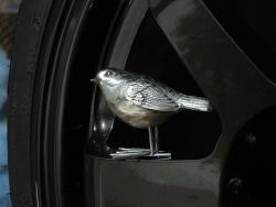 _Sparrow_'s Photo